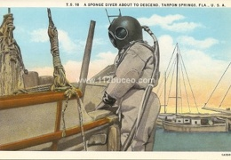 tarpon spings t16 sponge diver descend