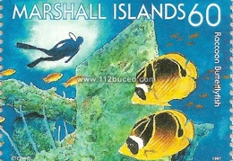 marshall diving 60 butterflyfish