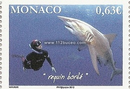 monaco requins requin borde